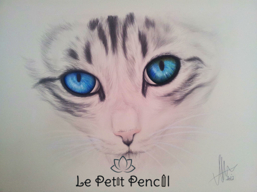retrato a lapiz barcelona gato