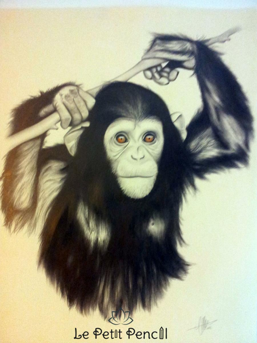 retrato a lapiz le petit pencil rostro monkey